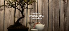 Grand cru matcha biologique by DavidsTea Organic Brand, Loose Leaf Tea, Matcha, Dorm, Green, Foods, Drink, Health, Recipes