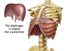 7 best breathing pacemakers for diaphragm paralysis images