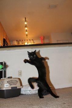 二足歩行な猫達 17|ねこLatte+