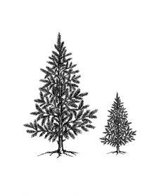 Christmas Trees singel small