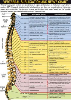 Vertebral Subluxation and Nerve Chart on Meducation Doctor Of Chiropractic, Chiropractic Care, Spinal Nerve, Spinal Cord, Nerve Anatomy, Human Anatomy, Hata Yoga, Ligaments And Tendons, Psoas Release