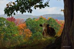 Somewhere in WV.  By Rick Burgess