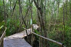 small ecological parks - Google Search