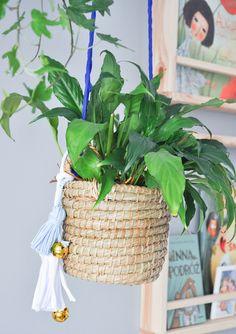 Rośliny dla opornch