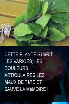 Superfoods, Plant Leaves, Healing, Herbs, Vegetables, Ainsi, Herbal Plants, Flu, Super Foods