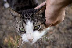 Cats, Animals, Wordpress, Blog, Pet Dogs, Animales, Gatos, Animaux, Animal