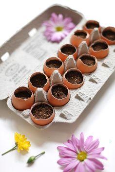 Good for starting seedlings! DIY Egg Crate Garden - perfect for the Spring