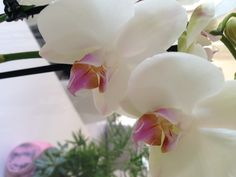 Orchids...love.
