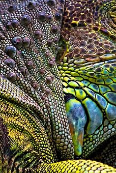 ~~ Iguana Abstract ~~ My lizard tattoo has colours like that! Natural Forms, Natural Texture, Natural Colors, Patterns In Nature, Textures Patterns, Organic Patterns, Foto Macro, Les Reptiles, Flora Und Fauna