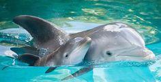 Interdiction des compétitions cruelles de chasse Dolphin dans les Keys FL!  Tuer est pas un sport !!