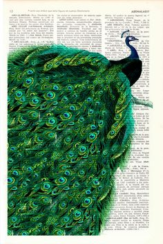 Peacock with endless tail Print on Vintage Dictionary Book altered art dictionary page illustration book print peacock art.