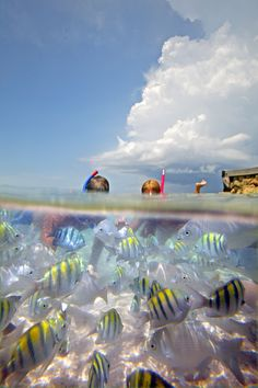 snorkeling experiences in Riviera Maya, Mexico; the second largest coral reef in the world. www.karismahotels...
