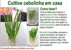 Como #cultivar #cebolinha em #casa. Saiba como fazer mais coisas em http://www.comofazer.org
