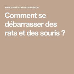 Comment se débarrasser des rats et des souris?