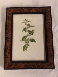 Familiar Wild Wild Flowers F. Edward Hulme Corn Mint Framed Picture