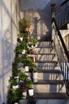 plants on stairs. Cherry Tree, Stairways, Garden Landscaping, Wilderness, Make It Simple, Muse, Florals, Lawn, Brick