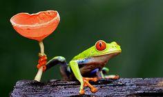 Frog & Fungus