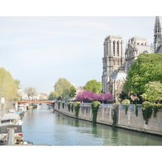 Paris Travel Photography Spring Along the Seine, Notre Dame, Cherry... ❤ liked on Polyvore featuring home, home decor, wall art, backgrounds, cherry blossom home decor, paris home decor, parisian home decor, french home decor and cherry blossom wall art