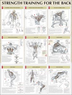 Strength Training for the Back #Strengthtraining #backtraining http://www.mysharedpage.com/strength-training-anatomy-strength-training-for-the-back-poster