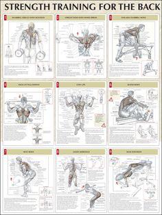 Strength Training for the Back #Strengthtraining #backtraining http://www.mysharedpage.com/strength-training-anatomy-strength-training-for-the-back-poster