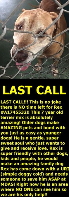 lease tag and share to save Rex! We cannot let him get killed. PLEASE! Miami Dade Animal Services is located at 7401 NW 74th St, Miami, #Florida 33166 and is open weekdays from 10am-6:30pm and weekends from 10am-4pm Our shelter is extremely over crowded so please act fast! https://www.facebook.com/urgentdogsofmiami/photos/pb.191859757515102.-2207520000.1452096914./1101001883267547/?type=3&theater
