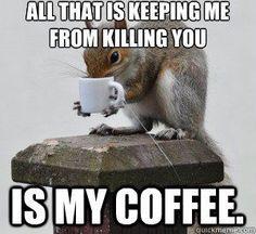 Squirrel Meme | squirrel coffee meme - Google Search