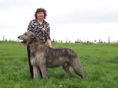 About Me - Faye Rogers - Animal Communication - New Zealand Animal Communication, New Zealand, Your Pet, Pets, Spirit, Healer, Animals, Animales, Ideas