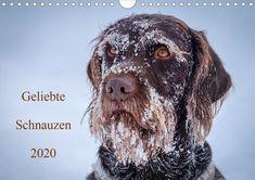 Sie lieben ausdrucksstarke Hundegesichter? Dann ist das Ihr Kalender! #hundegesichter #hundeaugen #hundeschnauzen #dogfaces #dogeyes #dognoses #wuffclickpic #wemakedogshappen German Shorthaired Pointer, Monat, Scenery, Dogs, Nature, Animals, Products, Dreams, Wall Calendars