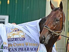 American Pharoah Can Add to Legacy in Classic - When it's all said and done, American Pharoah will be known as a Triple Crown winner -- those three words say it all -- but make no mistake, a victory in the Breeders' Cup Classic (gr. I) would add to that legacy.