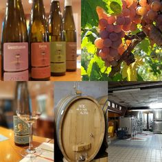 Experience the Love and Passion of wines made by small boutique, family owned wineries.