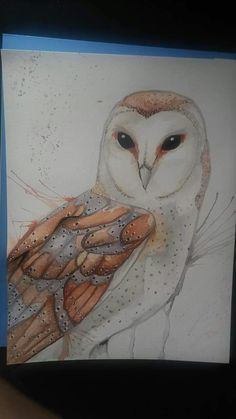 """Barn owl"" watercolor by Bobbie Wavrin"