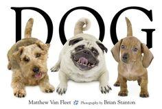 Dog by Matthew Van Fleet (Amazon)