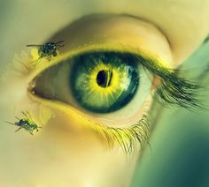 Spider Eye by Crazy-Kiwii on DeviantArt Yellow Eyes, Mellow Yellow, Green Eyes, Eyes Without A Face, Look Into My Eyes, For Your Eyes Only, Open Your Eyes, Color Shades, Shades Of Green