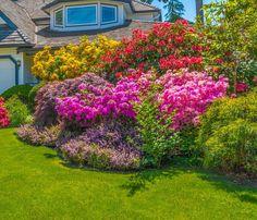 bäume, gräser, sträucher und blüht füllen fast den vorgarten, Best garten ideen
