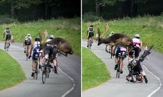 Deer collides with a competitor during triathlon #DailyMail