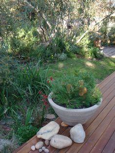 more of my garden.....