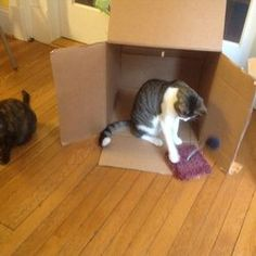 Danny's Pet Care - cat sitting visits at the client house. Brookland  NE DC area - Washington, DC, United States