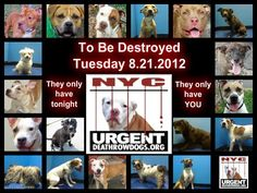 """Tonight's list is posted. 19 NYC dogs are in danger. Go to the ACC website http://www.nycacc.org/PublicAtRisk.htm before 6am to adopt a PUBLIC LIST dog (noted with a """"P"""" on their profile) but ONLY if you are serious about adopting and ONLY if you're able to GO TO the shelter in-person w/in 48 hrs. Or work with a rescue group if you can adopt/foster ANY of our dogs on the list tonight. A list of rescues can be found here: https://www.facebook.com/Urgentdeathrowdogs/app_137541772984354…"""