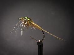 Galeria de moscas : Foto