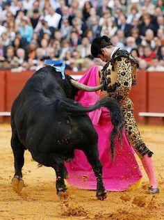 Ole Animals With Horns, Animals And Pets, Ole Bull, Matador Costume, Bull Horns, Man Vs, North Africa, Beautiful Horses, Japanese Art
