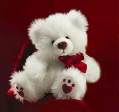 Happy Teddy Day 2016 is on Feb. 2016 get Teddy day Wishes,pictures and Teddy day quotes to celebrate the day with Joy and some Teddy Bear Hd wallpapers 2016 Teddy Day Pic, Happy Teddy Bear Day, Valentines Day Teddy Bear, Teddy Bear Images, Big Teddy, White Teddy Bear, Teddy Bear Pictures, Cute Teddy Bears, Happy Teddy Day Images