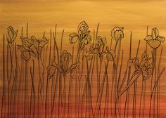 wallpaper IRIS FIELD - SENSET Iris, Sunrise, Night, Wallpaper, Day, Wallpapers, Sunrises, Bearded Iris, Irises