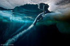 Blast-off - Paul Nicklen - Wildlife Photographer of the Year 2012 : Underwater Worlds - Runner-up