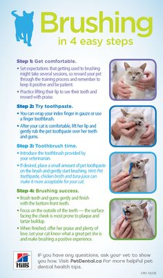 How to brush your cat's teeth in 4 easy steps