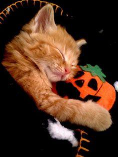 Sleeping kitty cuddles with a pumpkin! Awwww