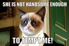 He's Back! The Best of the Grumpy Cat Meme in 25 Pictures
