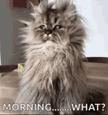 Image result for good morning gifs Animals And Pets, Funny Animals, Cute Animals, Funny Animal Videos, Funny Animal Pictures, Videos Funny, Crazy Cat Lady, Crazy Cats, Kittens Cutest