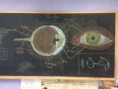 Physiology: The Eye chalkboard drawing and dictation