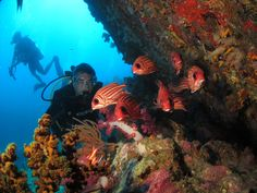 Similan Diving  Diver and Squirrel Fish  Richelieu Rock Thailand