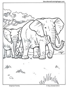 Elephant Family Coloring Pages